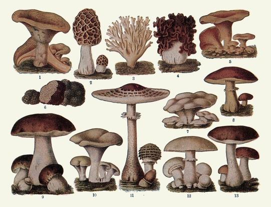 Camden mushroom farm